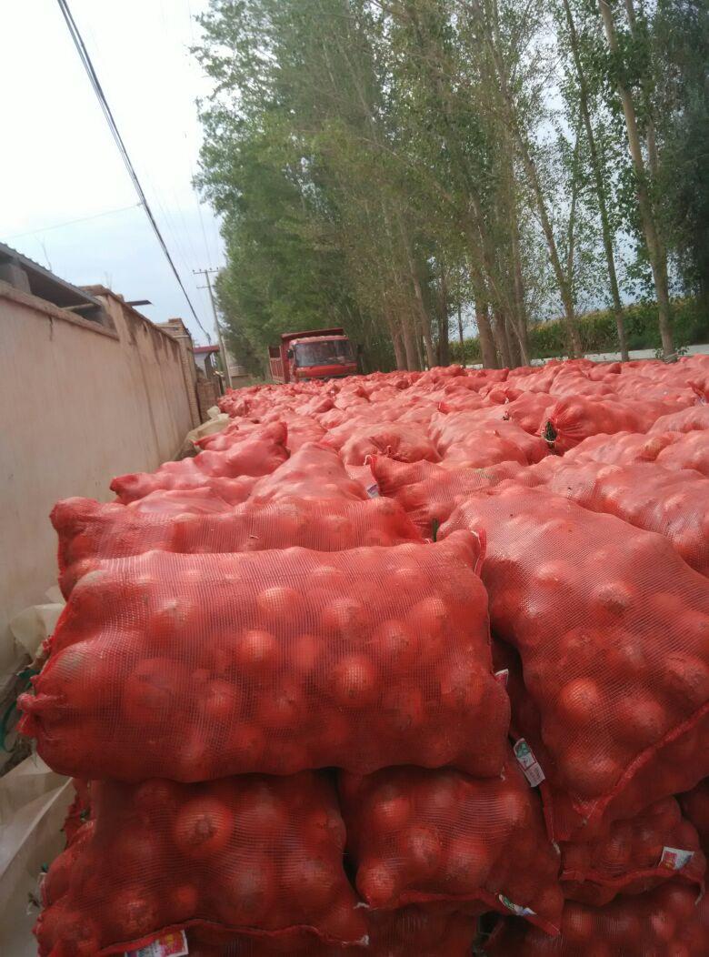 甘肃张掖市高台县黄皮洋葱 4~8厘米批发_陈山龙供应
