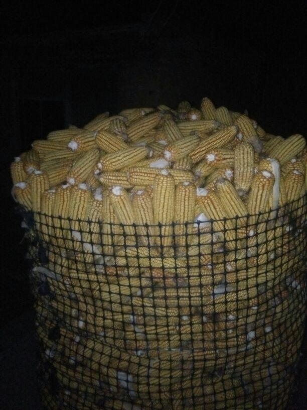 玉米笼子设计图片大全图片