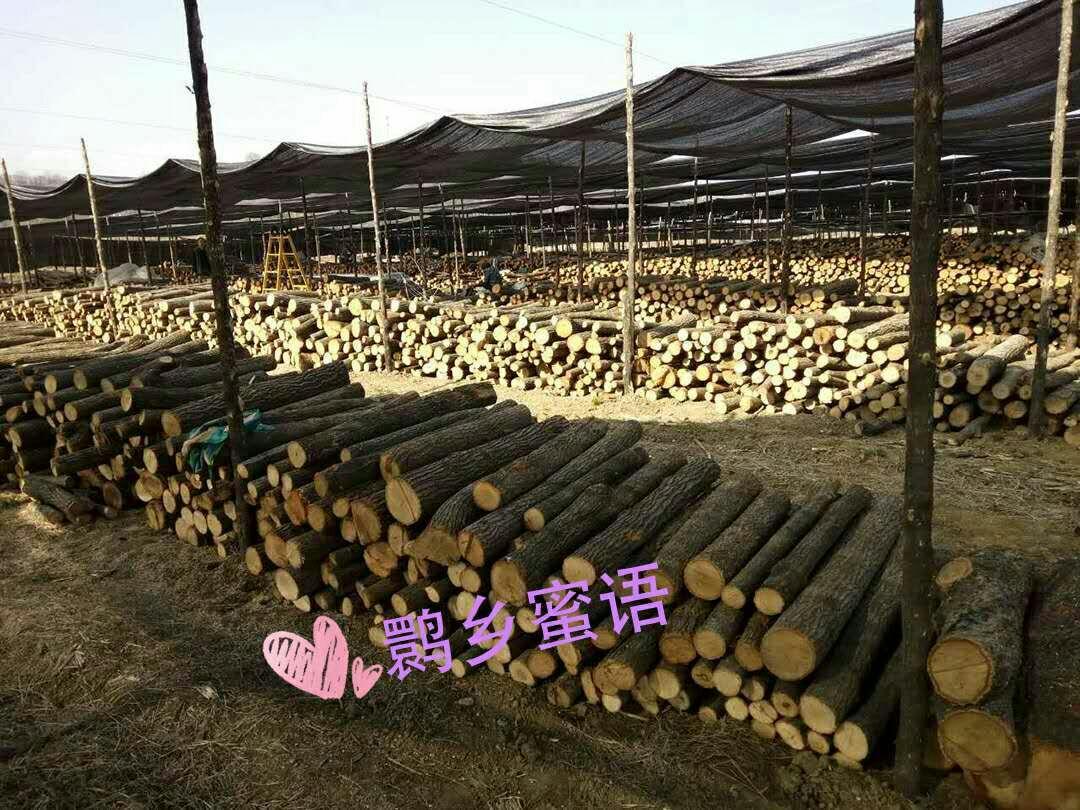 原木香菇陕西汉中洋县