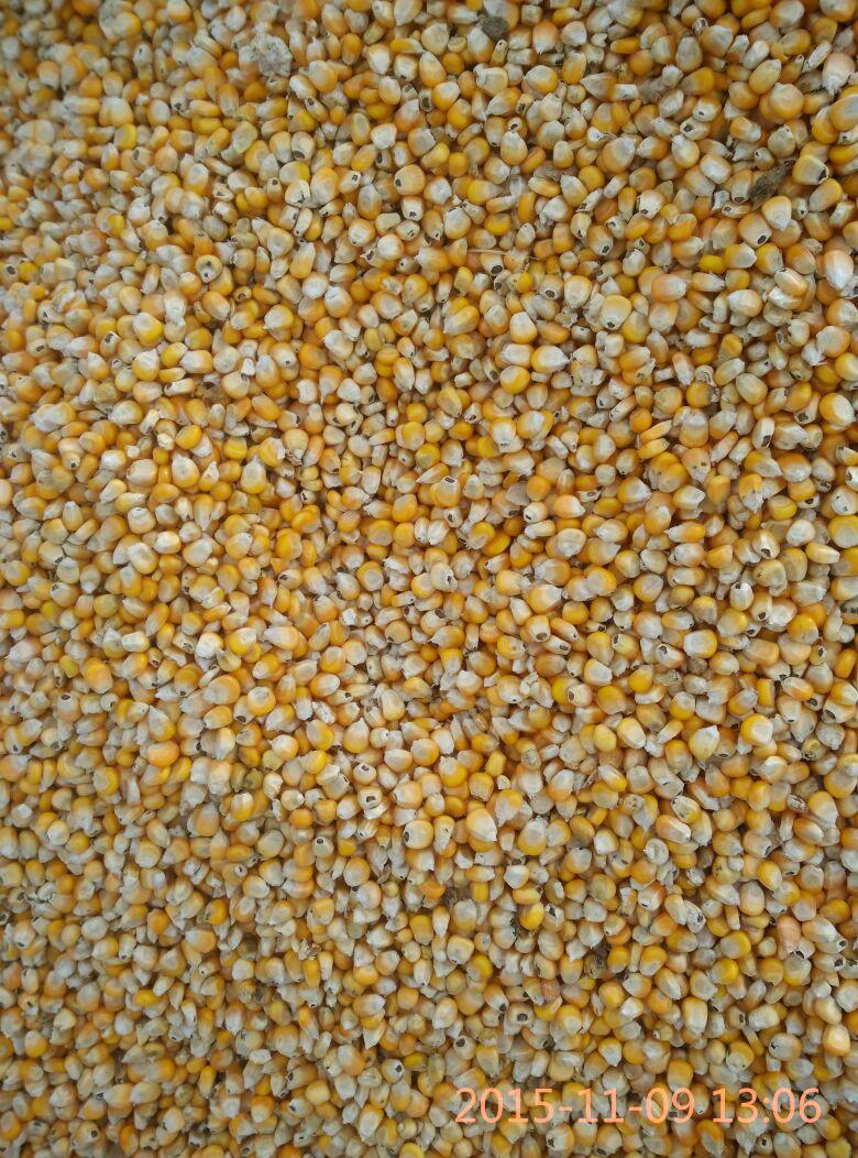 玉米粒简笔画带颜色