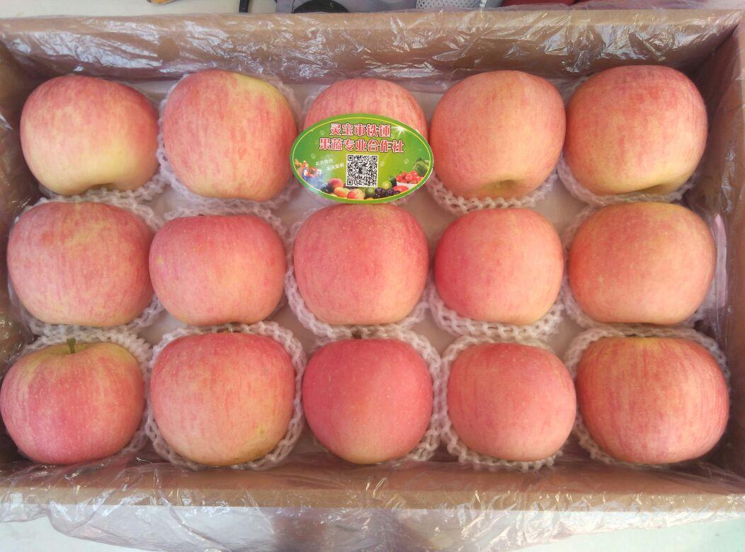 精品红富士苹果,15枚装,送礼高端大气上档次!