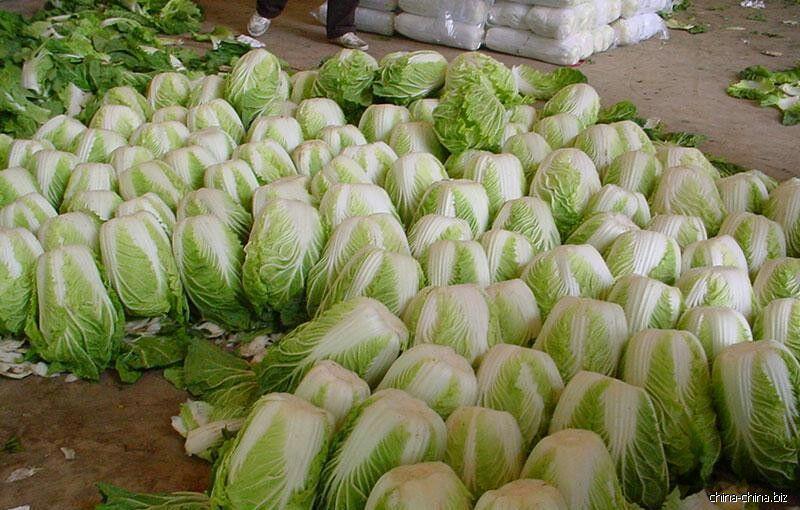 中国的种子是进口的吗