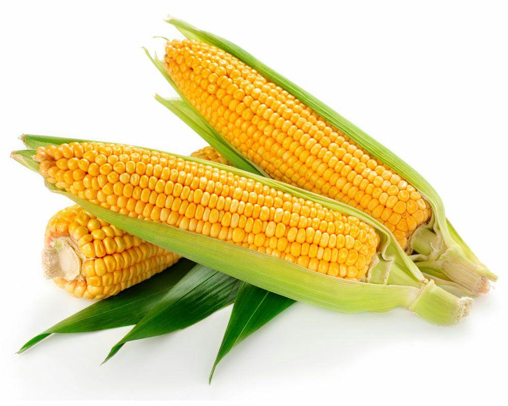 玉米果实结构示意图
