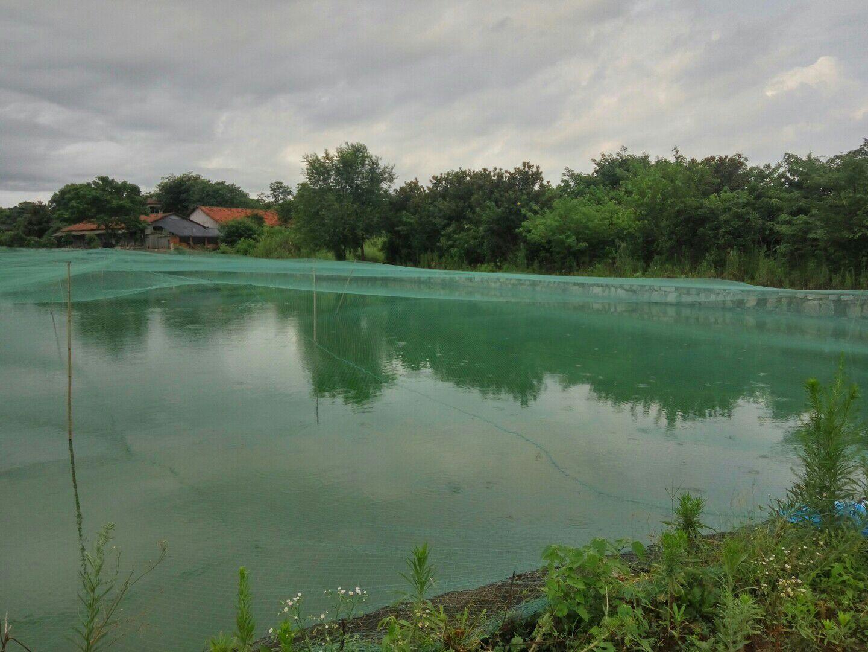 湖南岳阳市君山区台湾泥鳅 食用 人工养殖 10~15cm_方