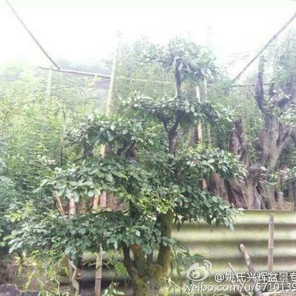 湖北宜昌市长阳县