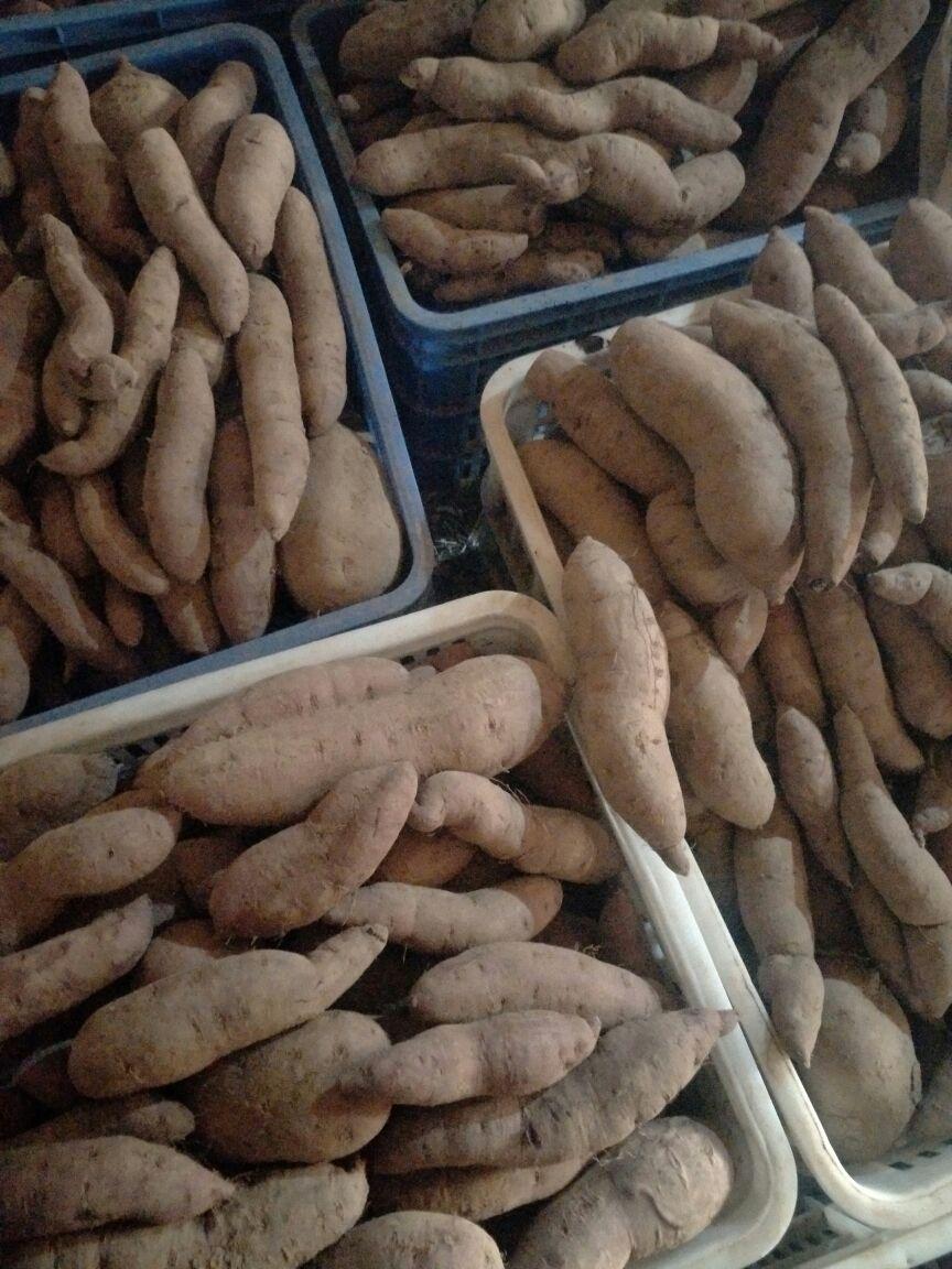 山东青岛市城阳区紫薯 紫心 2两以上批发_刘焕玉供应