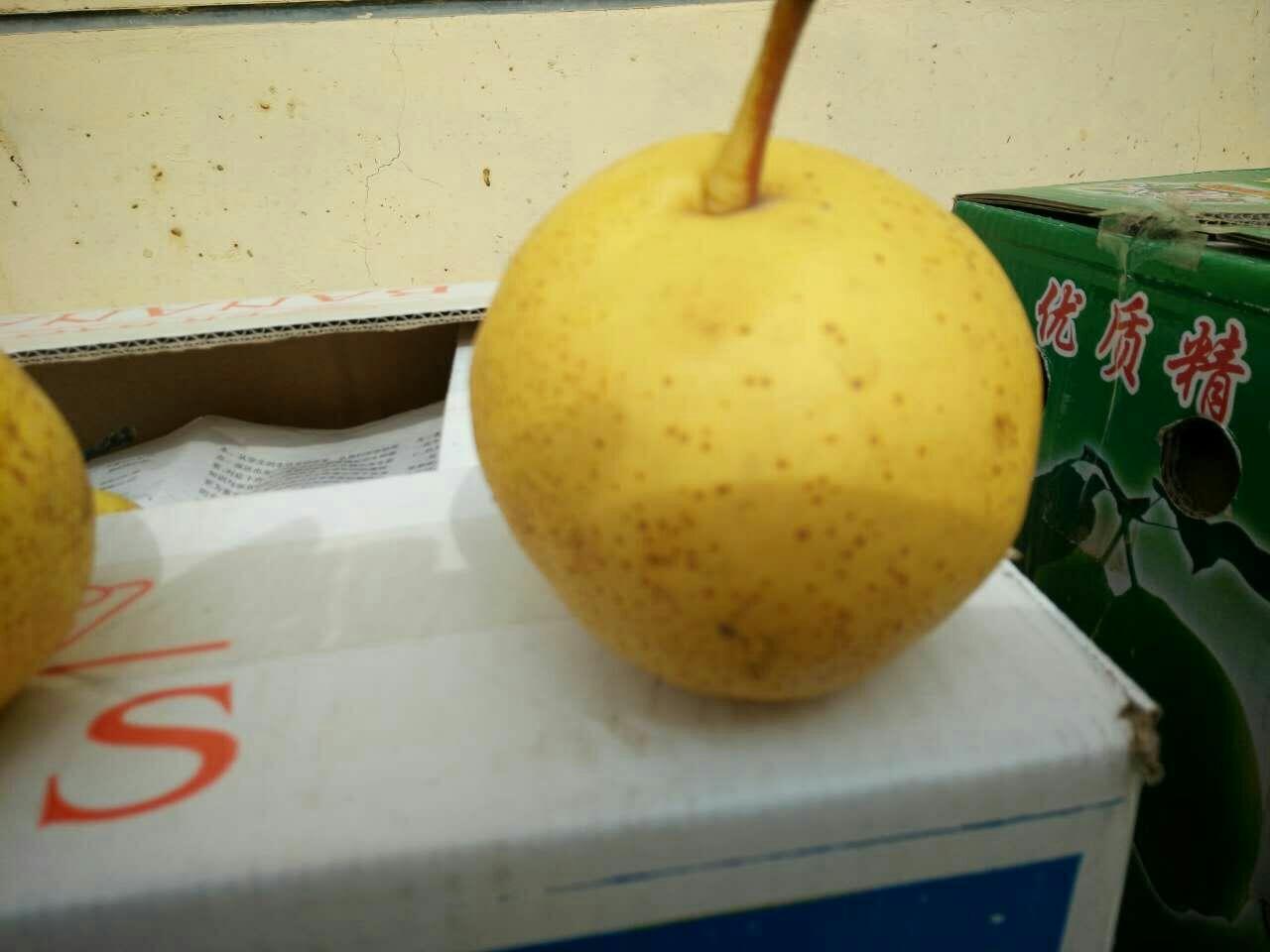 素描静物苹果梨组合步骤画法