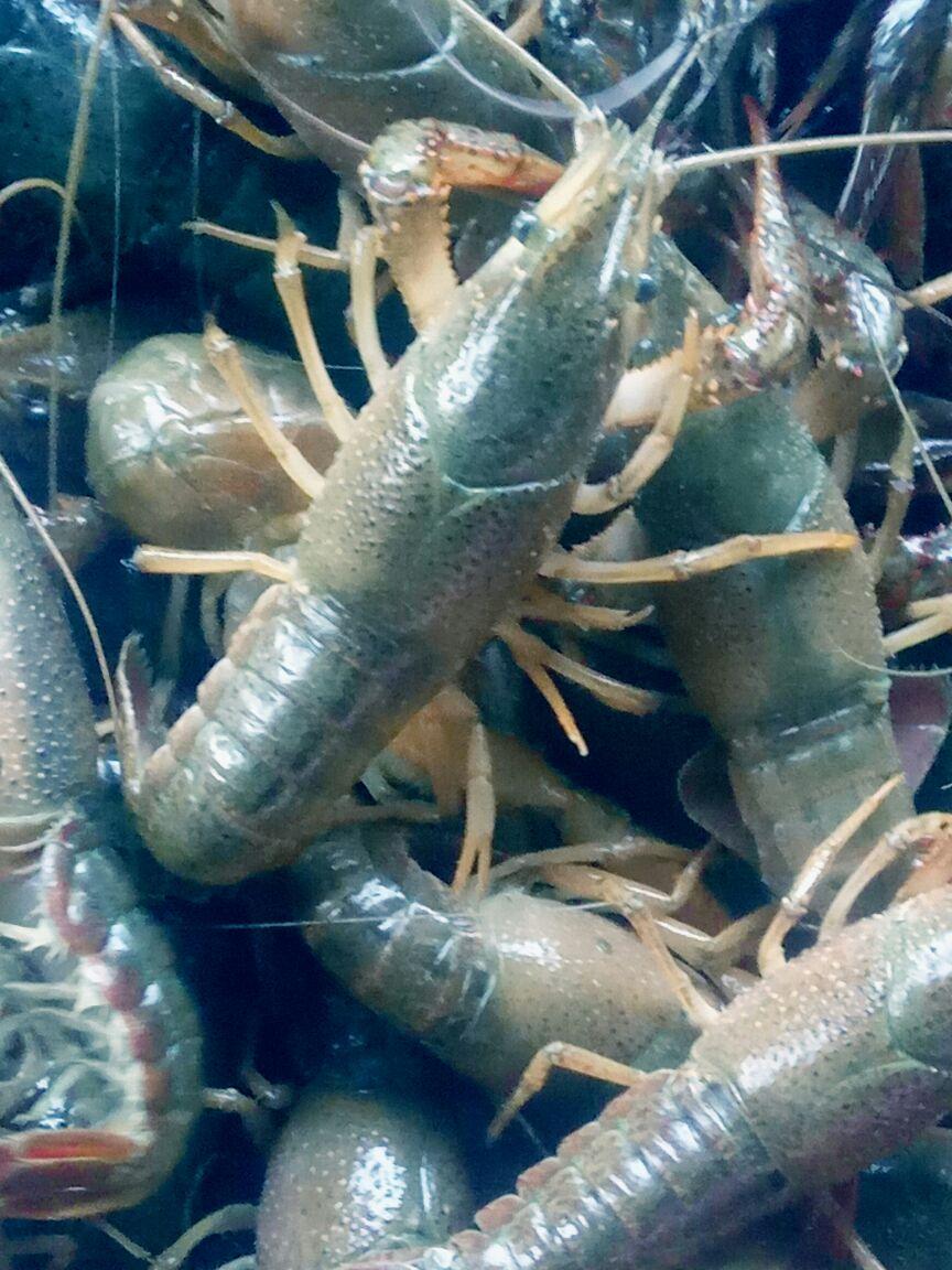 壁纸 海底 海底世界 海洋馆 水族馆 864_1152 竖版 竖屏 手机