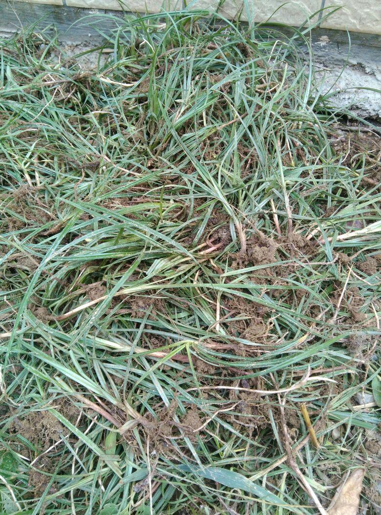 竹节硅藻泥图案