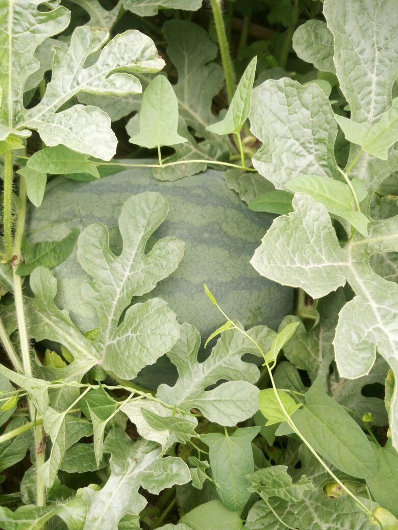 背景 壁纸 绿色 绿叶 树叶 植物 桌面 780_1040 竖版 竖屏 手机