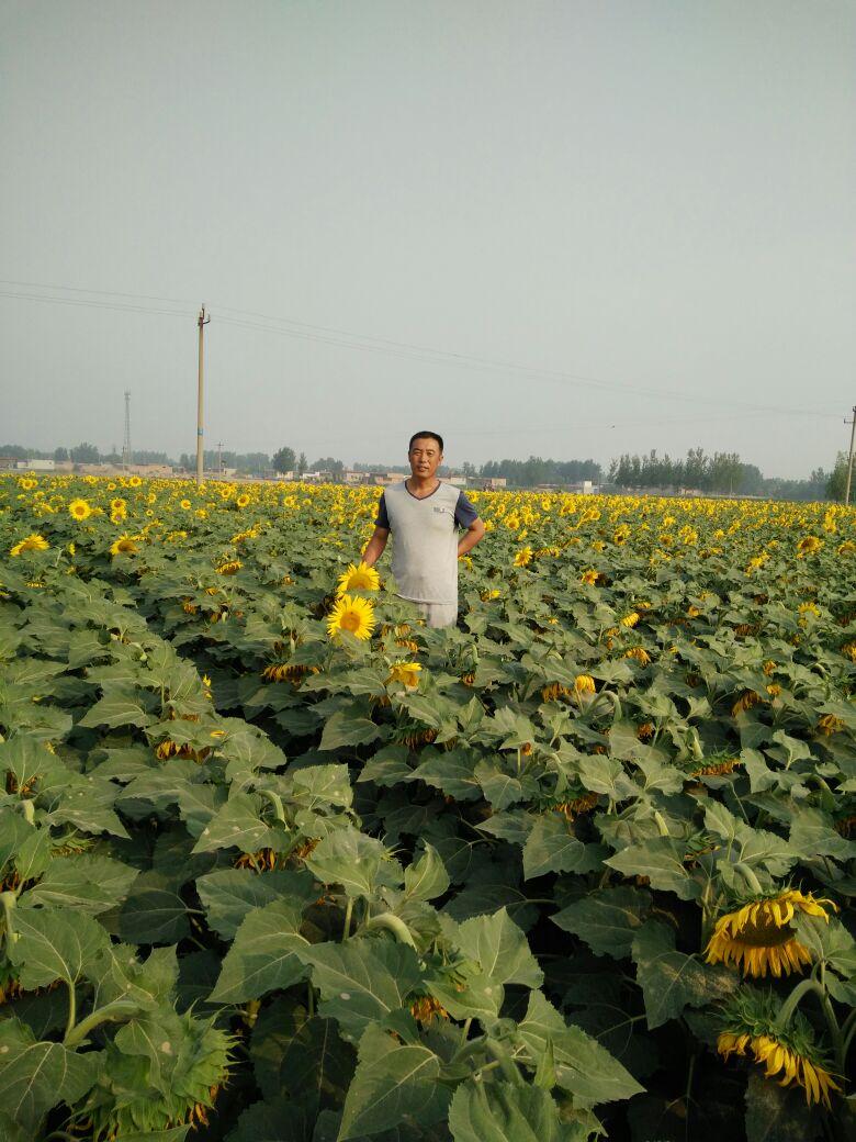 河北沧州市河间市