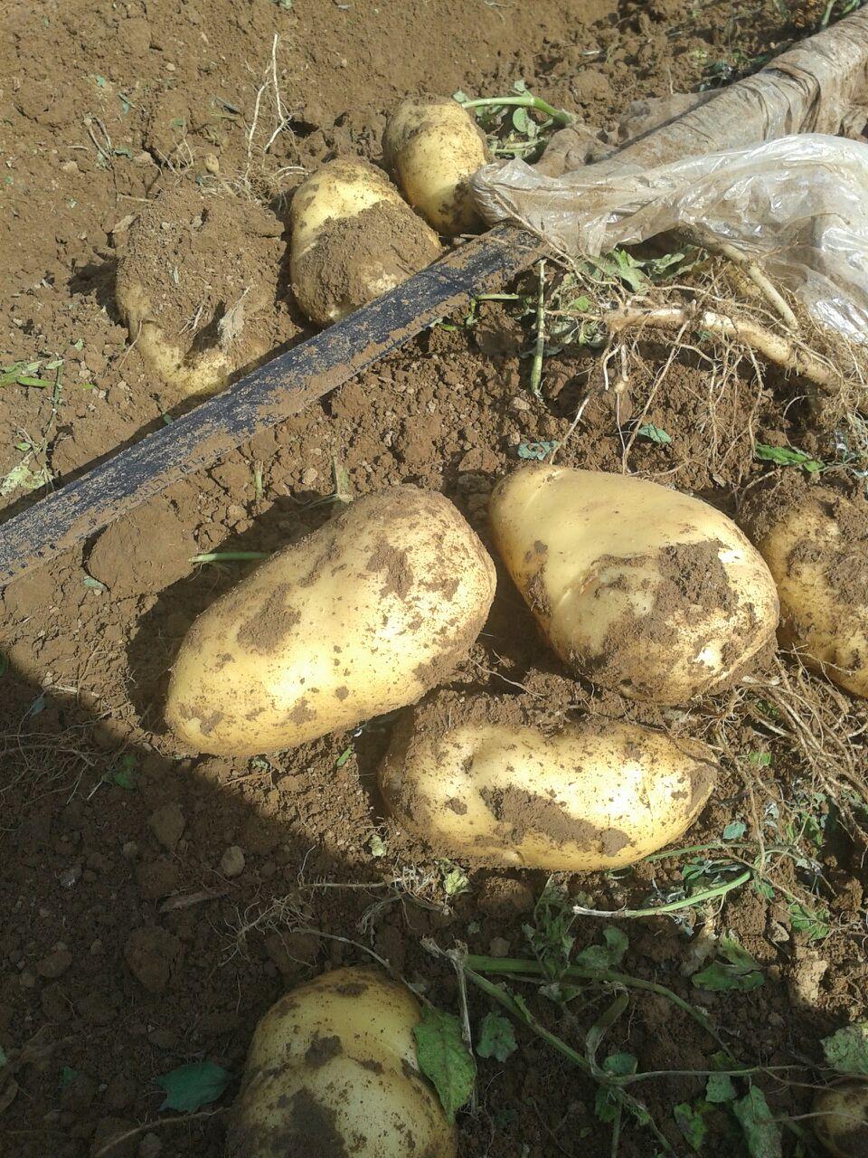 用土豆做的动物造型