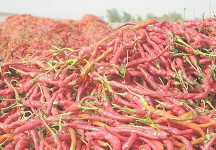 供应大厅  蔬菜 鲜辣椒  小米椒  小米椒 5~10厘米 红 中辣  货品详情