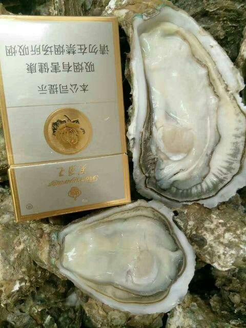 港口城市广东湛江东海岛,本养殖场得天独厚,生蚝吊养在这一带原生态