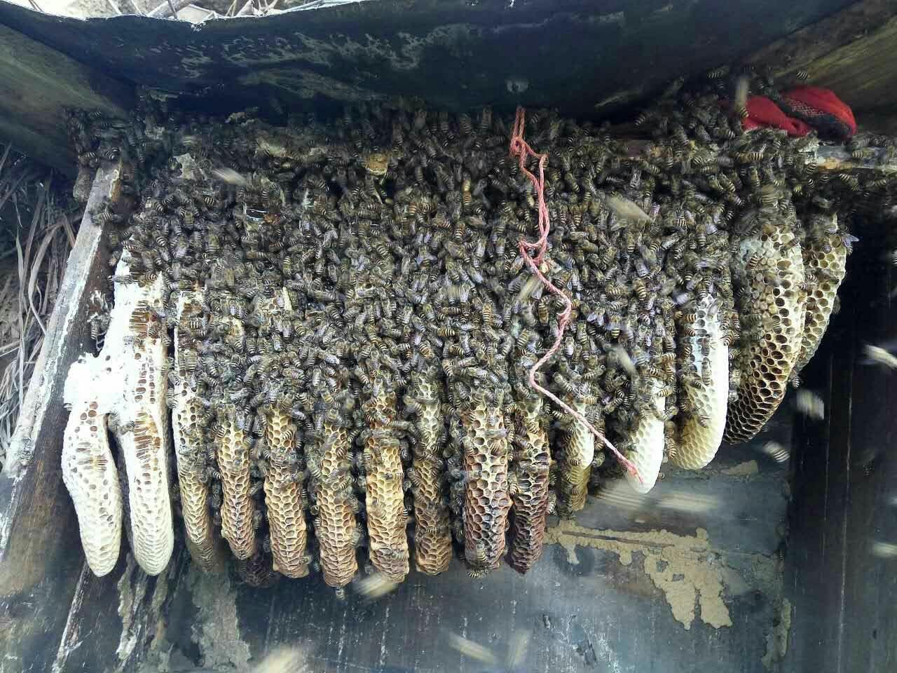真正土蜂蜜多少钱一斤,土蜂蜜价格行情介绍 食品招商网