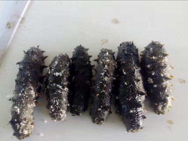 野生海参 食用 盐干