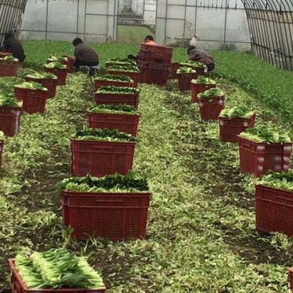 种植企业             老板信息 上海青浦区白鹤镇