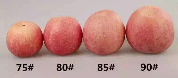 正宗万荣苹果,酸甜可口