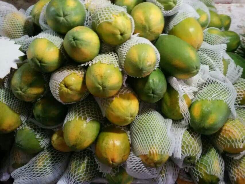 木瓜所有的品种和图片