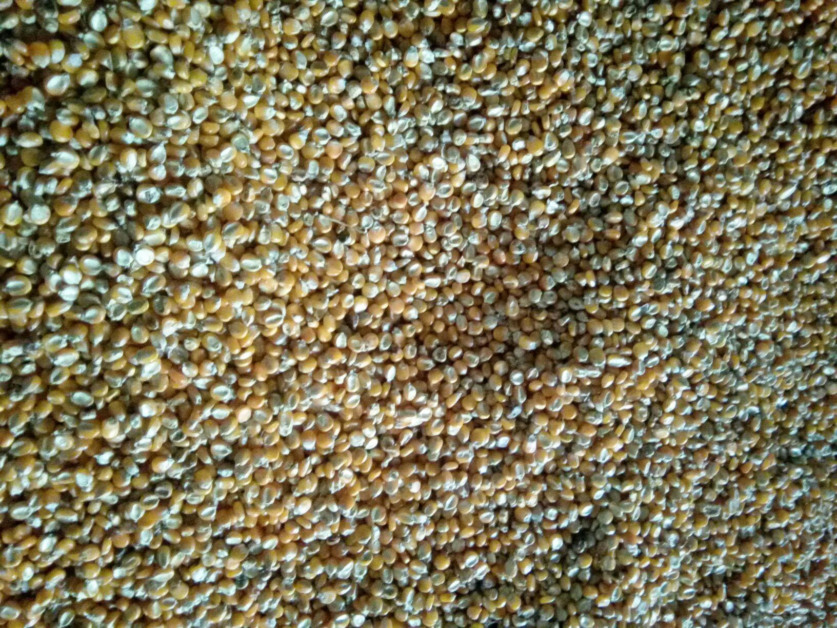 幼儿手工泡沫玉米粒作品图片