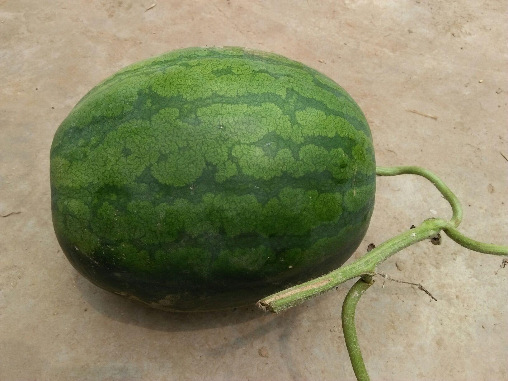 单个西瓜图片大图
