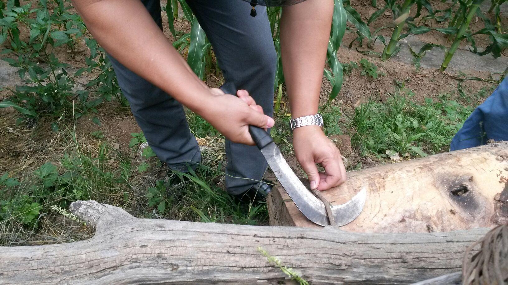正宗秦岭圆桶土蜂蜜蜂农直售,核桃树掏空做蜂箱,两年才取蜜一次,无