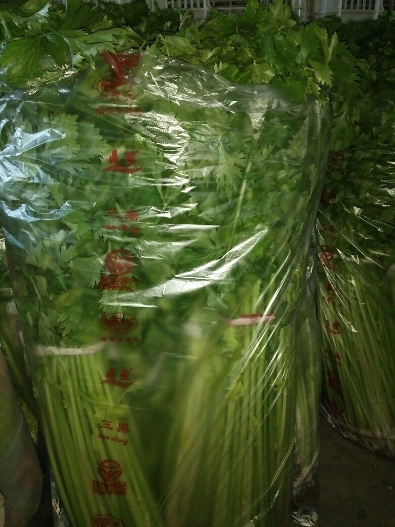 山东青岛市莱西市玻璃脆芹菜 45cm以上批发_王丽供应