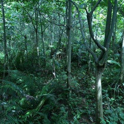 壁纸 风景 森林 桌面 420_420