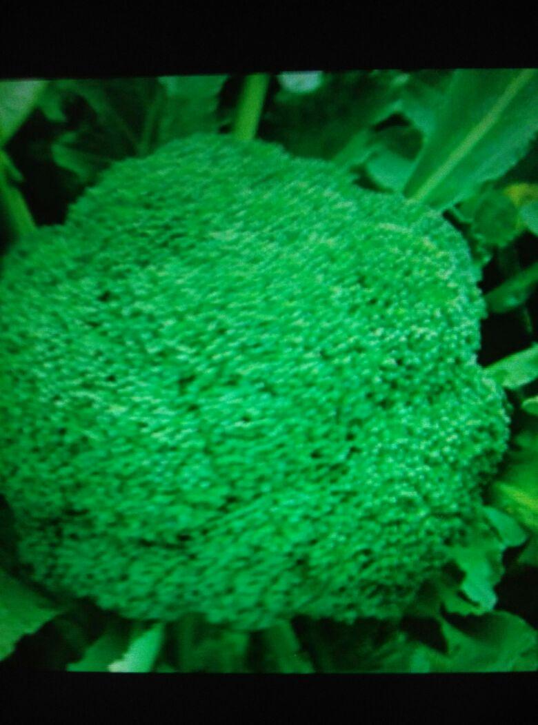 背景 壁纸 绿色 绿叶 树叶 植物 桌面 780_1052 竖版 竖屏 手机