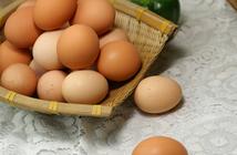 五月份鸡蛋价格跌跌停停