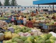 """2月24日""""农产品批发价格200指数"""""""