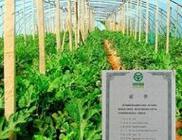 武山县:加快发展现代农业增强农村发展活力