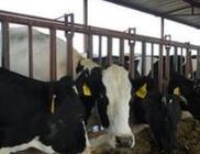 密切配合 齐抓共推 构建奶业发展协同工作机制