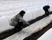 四川省南充市掀起大春生产热潮