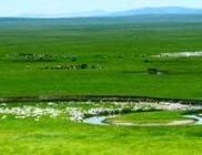 逊克县将畜牧业发展扶持政策落到实处