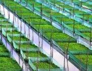 三月份农业农村经济发展持续向好