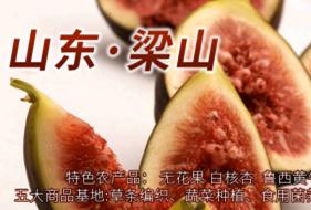 专题:农产品电商东风吹进梁山