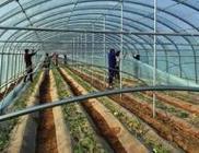 充分发挥科技对农业产业扶贫的支撑作用