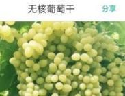 中国最热的县 世界葡萄中心网上采购方便
