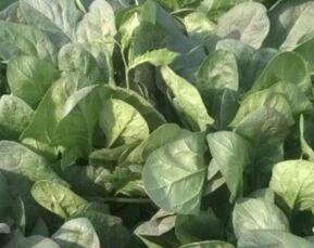 """5月23日""""农产品批发价格200指数"""""""