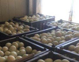 桓仁:传统农业生机勃勃 特色产业蒸蒸日上