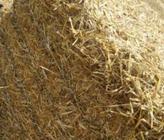 农产品及加工副产物综合利用模式研讨会在京召开