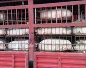 克山县生猪产业链条逐步拉长