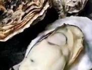 牡蛎(生蚝)正在成为网购生鲜超级单品