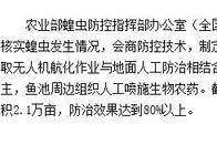 吉林省及时有效控制突发高密度亚洲飞蝗