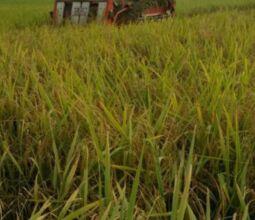 农业转移人口市民化有了新突破 打工务农两相宜