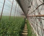 从事休闲农业有福啦 政策360度助力成功