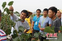 一亩田农业产业链保定峰会助力地方葡萄产业升级