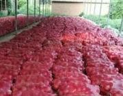 """8月18日""""农产品批发价格200指数"""""""
