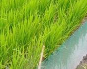 高质量完成耕地轮作休耕制度试点任务